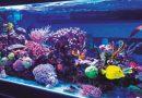 A importância da presença digital de sua loja de aquarismo