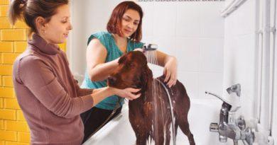 Cães trabalhosos no banho e tosa: como lidar?