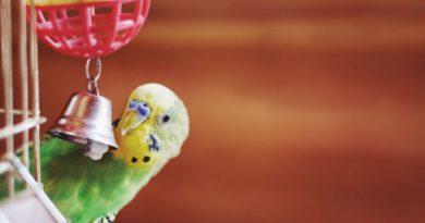 Cuidados para introdução de novas aves