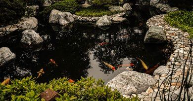 Como atender o cliente que busca por lagos ornamentais?