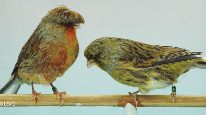 Brasileiro de Ornitologia em Itatiba fecha evento com 9,5 mil aves