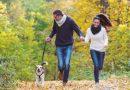 Investindo na saúde e bem-estar dos pets