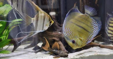 Desafios e panorama geral da aquariofilia Brasileira atual