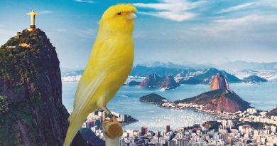 Rio de Janeiro: Destaques em serviços e empresas tradicionais